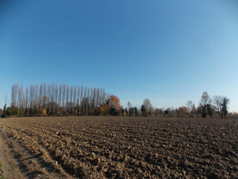SPINEA terreno agricolo di 14.582 mq.